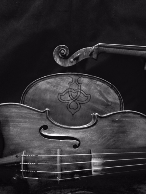 blck and white violins